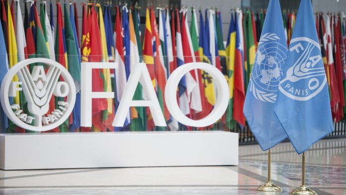 Misión de la FAO llegará a la RD para verificar la situación de la peste porcina africana