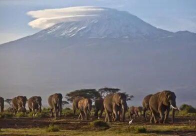Reporte prevé rápida desaparición de los glaciares de África